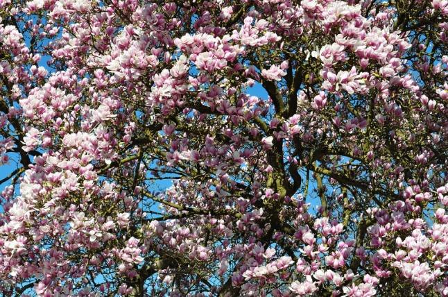 spring-211635_960_720