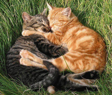 cats_cuddle-cats-cuddling