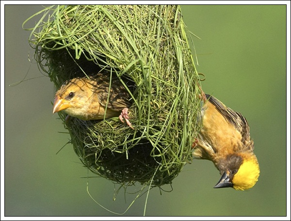 pictures-of-bird-nest-23