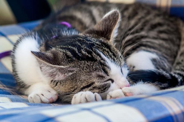 cat-919662_960_720