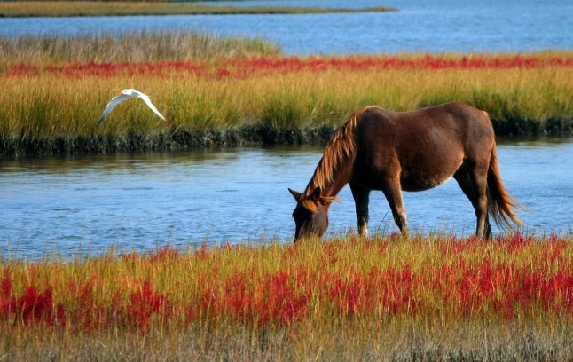horse-60153_960_720