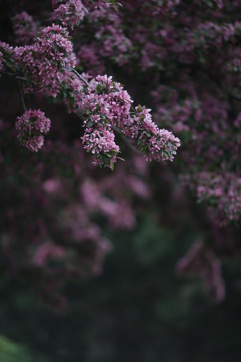 pink-596941_960_720