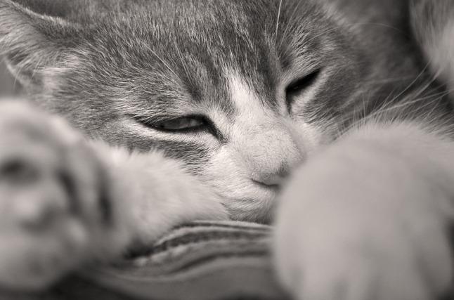 cat-1674617_960_720