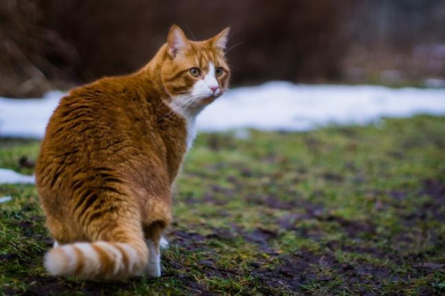 cat-775393_960_720