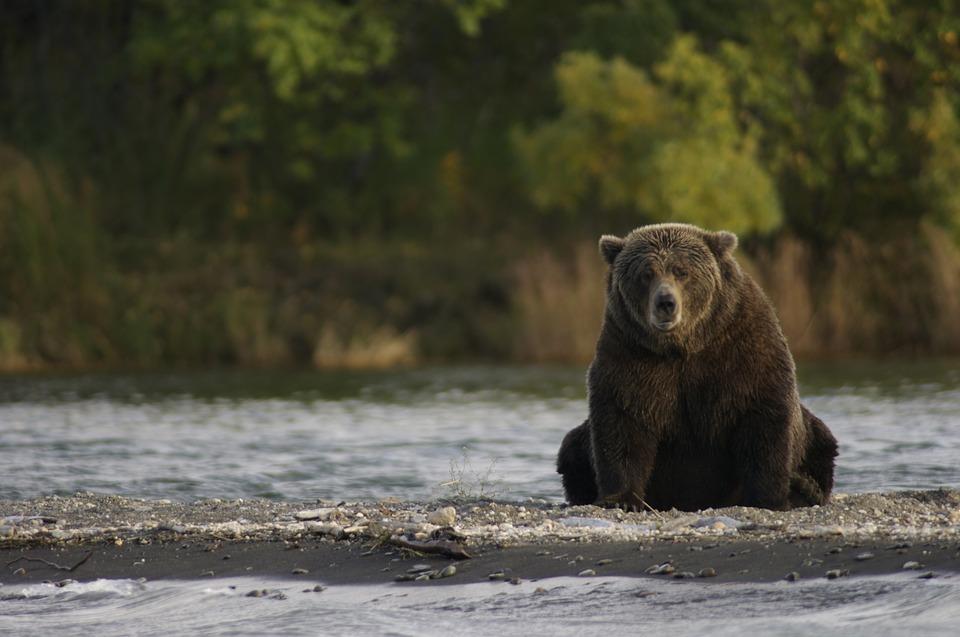 bear-2095379_960_720.jpg