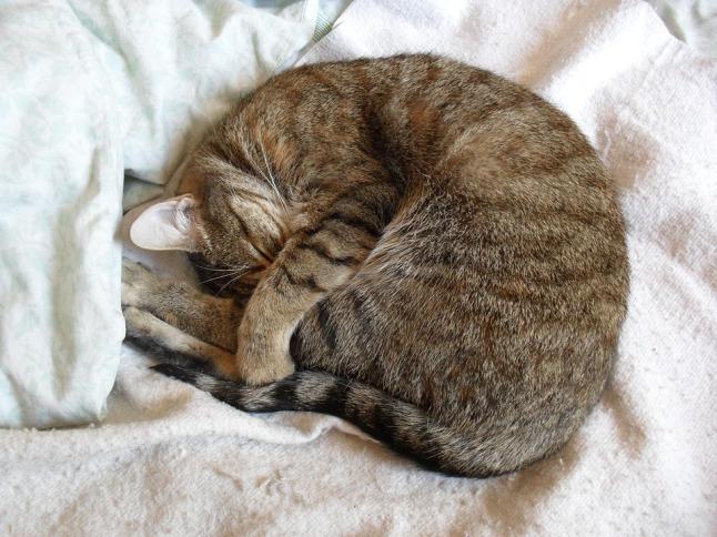 cat-1177419_960_720