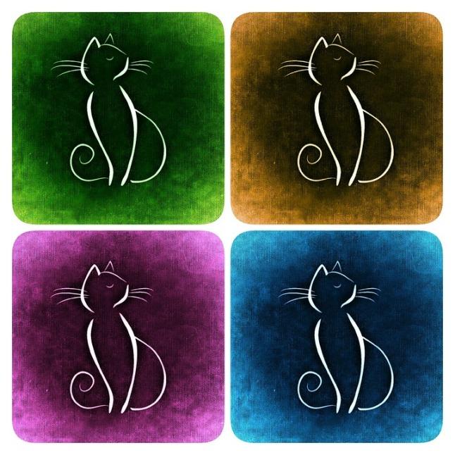 cat-860396_960_720