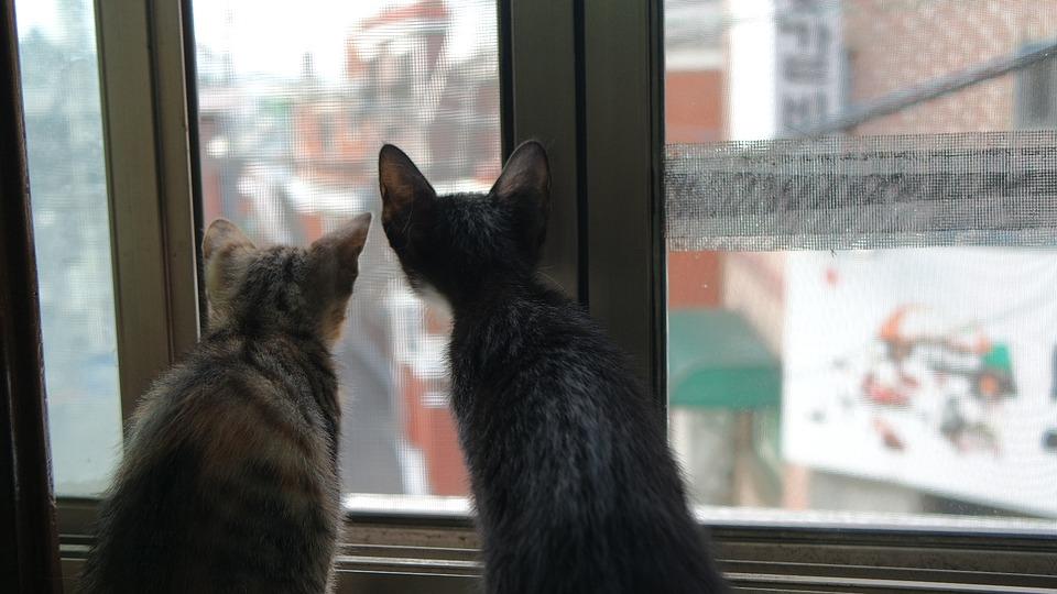 cat-2205276_960_720
