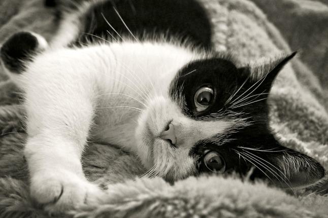 cat-2178851_960_720