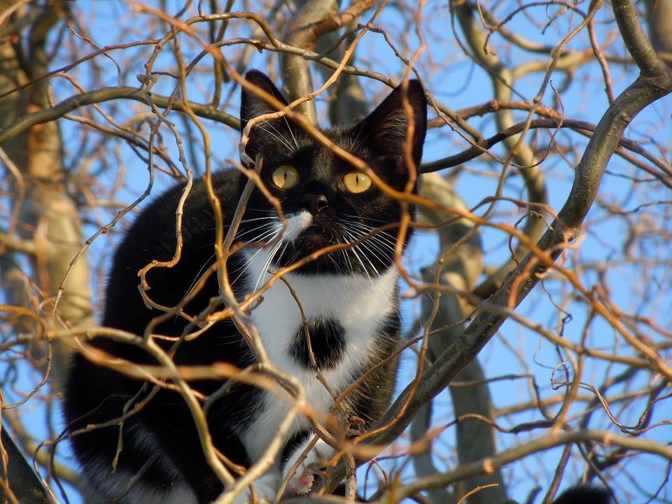 cat-93986_960_720