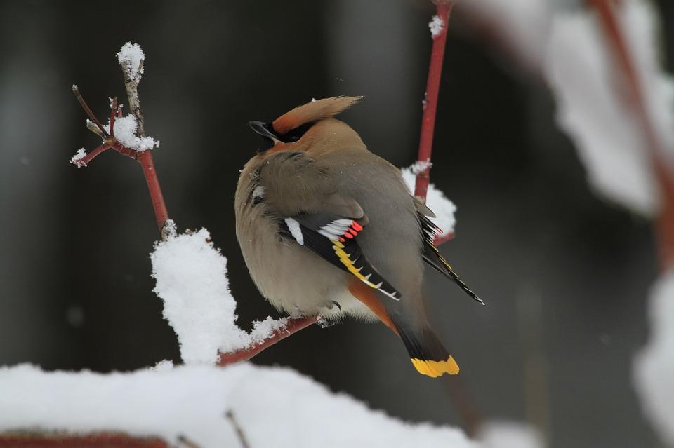 bird-1014238_960_720