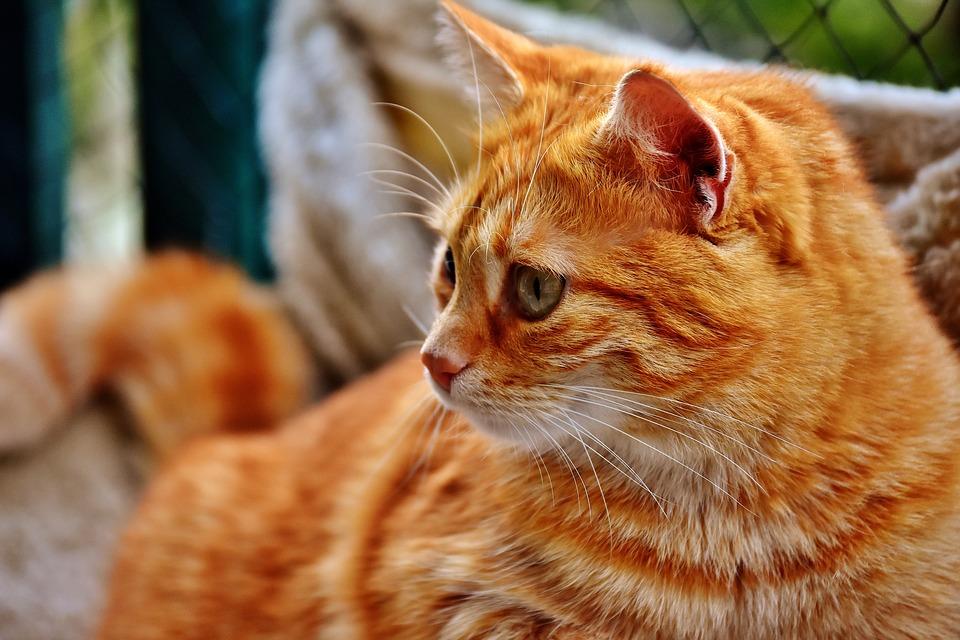 cat-2828158_960_720