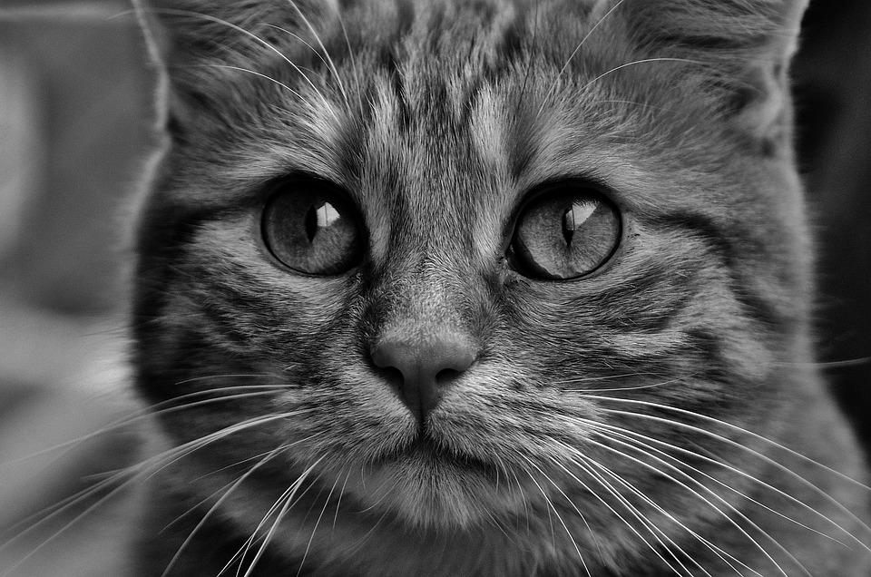 cat-2488395_960_720