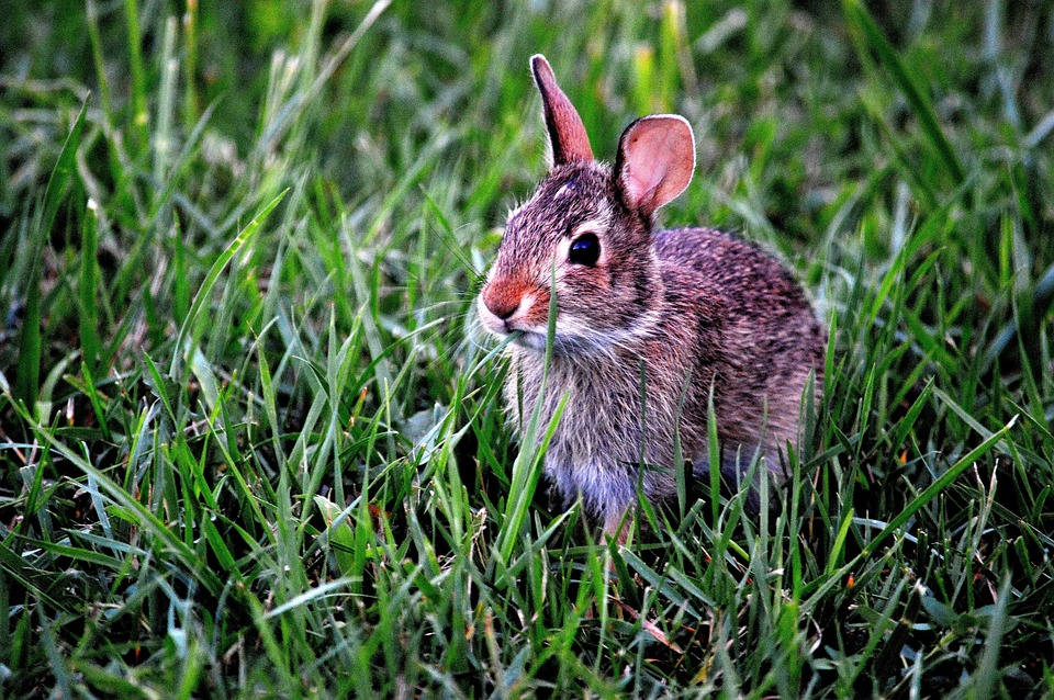 bunny-183301_960_720