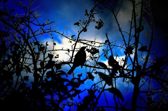 sininenlintu