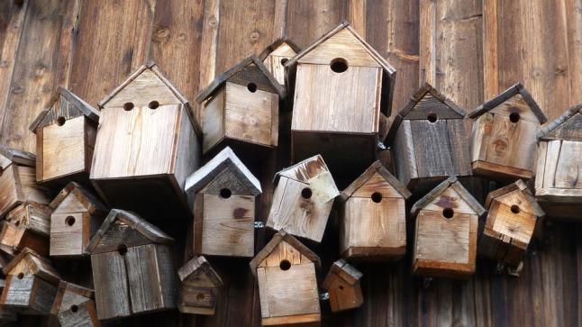 bird-feeder-248946_960_720