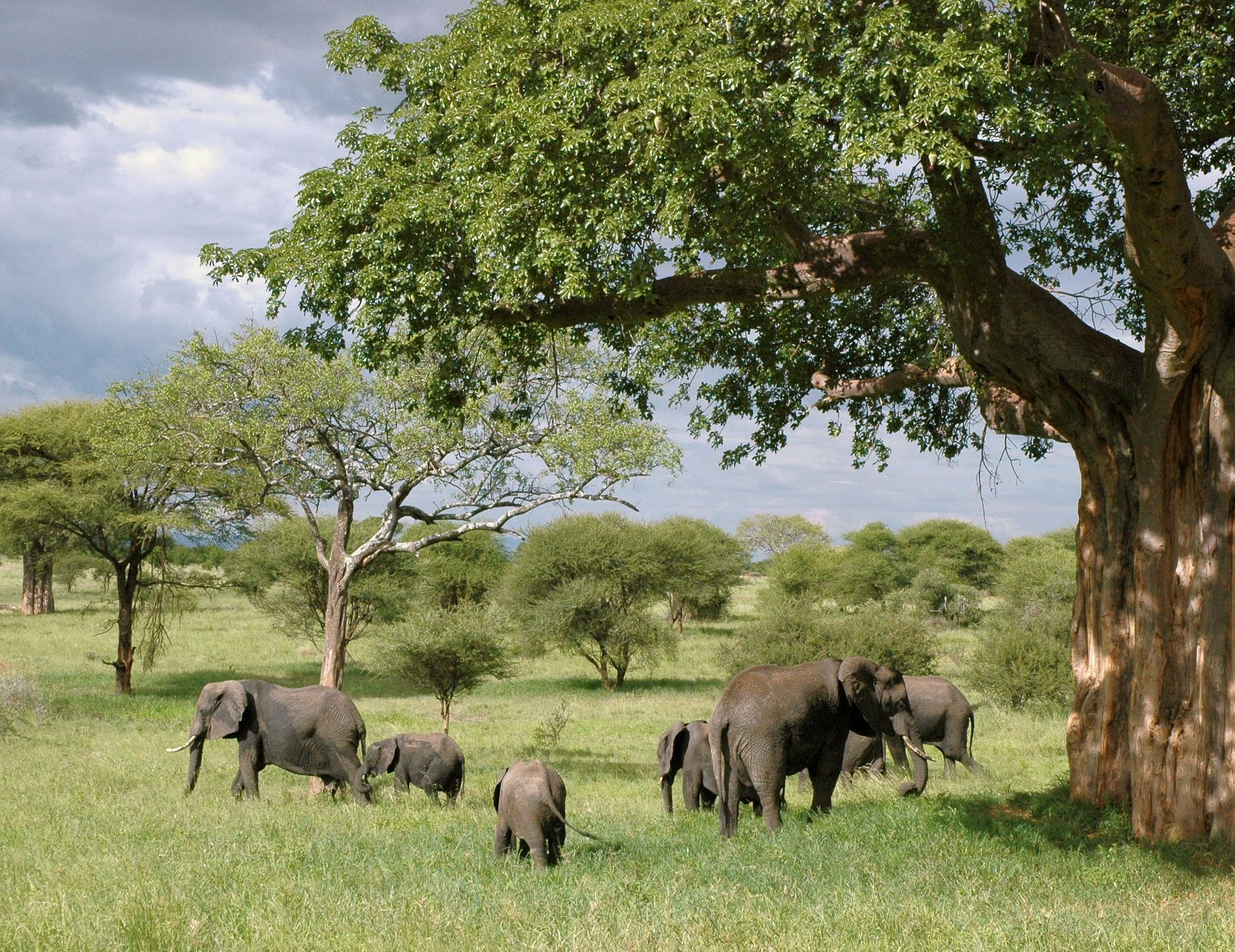 elefanttilauma