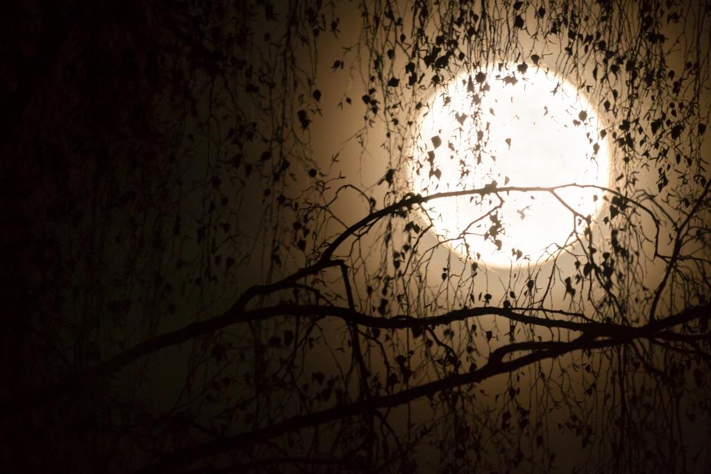 Valokuvassa kuu paistaa puun oksien läpi. Oksat näkyvät siluettina sen edessä.