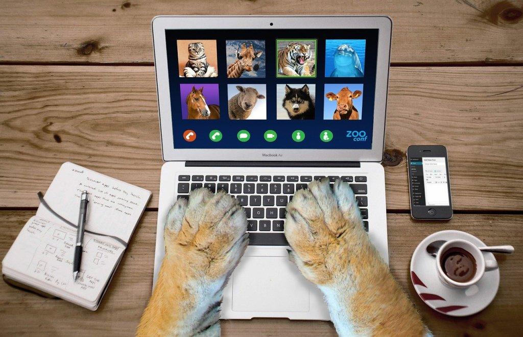 Kuva tietokoneesta, jonka näytöllä näkyy videopuhelu. Osallistujina on erilaisia eläimiä. Näppäimistöllä näkyy isot kissaeläimen käpälät.